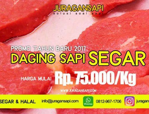 Promo Jual Daging Sapi Segar Murah 2017